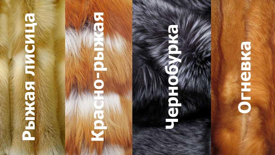 4 вида меха лисы