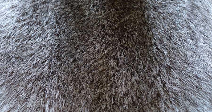 Мех енота